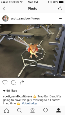 pokemon go instagram the best personal trainers